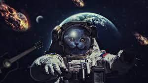 Cat In Space 4k, HD Artist, 4k ...