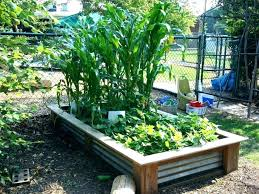 attractive raised bed vegetable garden plans raised garden bed layout raised bed vegetable garden plans raised