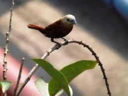 Untuk melihat detail lagu burung prit gantil klik salah satu judul yang cocok, kemudian untuk link download burung prit gantil ada di halaman berikutnya. Berapa Harga Burung Emprit Cek Harga Termurah Sekarang Juli 2021 Daftar Biaya Tarif