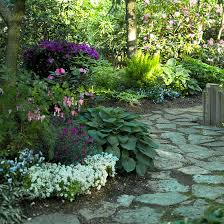 best garden plants. Sweet Alyssum, Pansy, Woodland Garden, Purple And White Flowers Best Garden Plants R