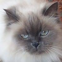Лариса (nechaevalarisa2) на Pinterest