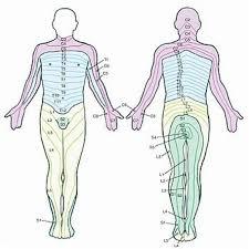 Lower Back Nerve Chart Lumbar Low Back Spinal Nerves