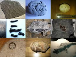 Discovering Fossils Fossil Identification Service