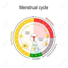 Menstrual Cycle Chart Increase And Decrease Of The Hormones