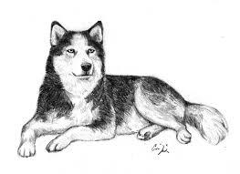 Siberian Husky Disegno Libero Con Disegni Di Animali A Matita Facili
