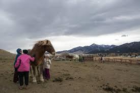 United In Light Draft Horse Sanctuary Gentle Giants Livingston Draft Horse Sanctuary Holds Open