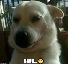 The expressionless wonder now w/ expressions !! Bruh Doggo Imgflip
