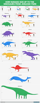 animal sizes chart dinosaur size comparison chart business insider