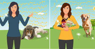6 Natural Solutions For Environmental Allergies In Dogs