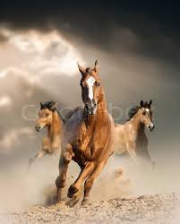 wild horses running. Plain Horses Wild Horses Running Wild In Dust Under Ray Of Light Through The Storm   Stock Photo Colourbox For Horses Running E
