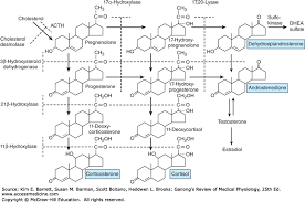 11 hydroxycorticosteroids