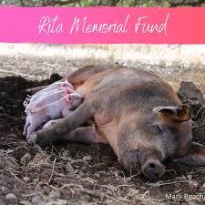 Donate to Rita Memorial Fund