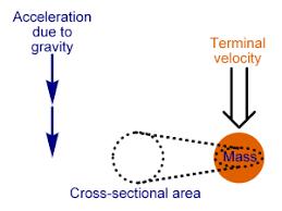 Calctool Terminal Velocity Calculator