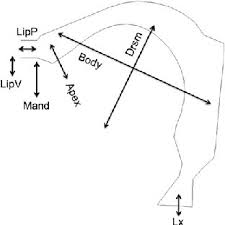 louis jean boe senior researcher speech comm university of schematic representation of the main articulatory effects of the model s seven parameters