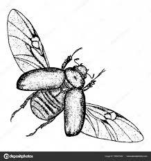 фото жук скарабей тату эскиз жук скарабей векторное изображение