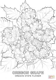 Small Picture Oregon State Flower coloring page Free Printable Coloring Pages