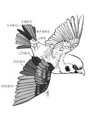 Koji On Twitter なかなか覚えられない翼の構造をこの機会に覚えよう