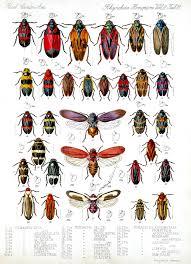 True Bugs Ask A Biologist