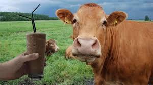 chocolate milk cow milk ile ilgili görsel sonucu