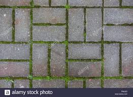 Grass background tile Editing Concrete Tile On The Ground Pavement Path Abstract Pattern Texture Background With Grass Alamy Concrete Tile On The Ground Pavement Path Abstract Pattern Texture