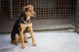 Pet Sitter Animal Career Profile