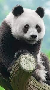 Panda Cute 4K Wallpaper #4.551