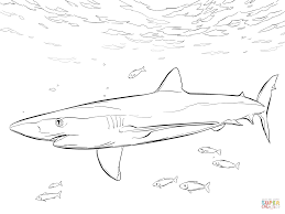 Blue Shark With Pilot Fishes Coloring