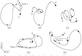 Figure 4 From Deaf Blind Can Practise Horse Riding With The