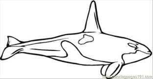 Small Picture N Whale Coloring Pages 10 Med Coloring Page Free Whale Coloring