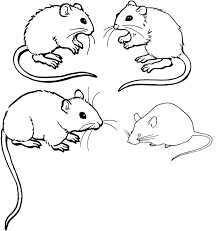Small Picture Mouse Coloring Page 23 Mice Coloring Pages nebulosabarcom
