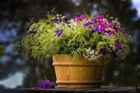 beautiful flower pots 15