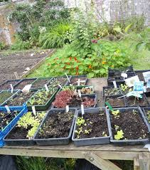 Kitchen Gardening Permaculture Courses Kitchen Gardening Course Springtime