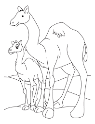 Small Picture Camel and Baby Camel coloring page Download Free Camel and Baby
