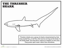 20 Sharks For Shark Week Coloring Pages