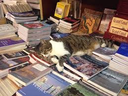 Image result for Acqua Alta bookshop