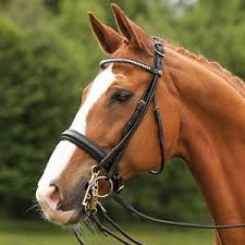 Kieffer Bridle Size Chart Otto Schumacher Tiffany Double Bridle Dressage Extensions