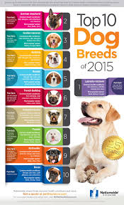 Most Popular Pets Top 10 Dog Breeds Of 2015
