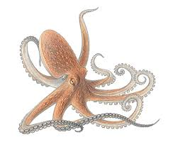 Small Picture Octopus Drawing Tumblr Images Reverse Search