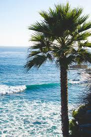 palm trees tumblr vertical. Beach, Blue, Chill, Green, Hot, Palms, Road, Sand, Palm Trees Tumblr Vertical