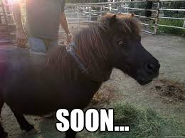 Evil Mini Horse memes | quickmeme via Relatably.com