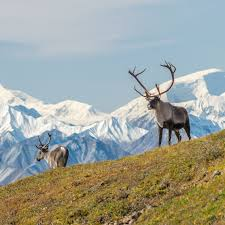 Jul 27, 2021 · zillow has 5,199 homes for sale in alaska. Alaska Tours Alaskan Vacation Packages Adventures By Disney