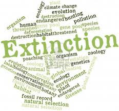 extinction of animals essay 155 words essay on endangered animals for school students