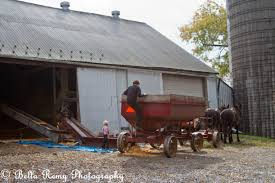 an amish harvest emily carter mitchell nature wildlife  rain or shine the amish