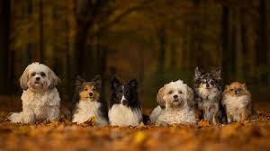Dog Scientific Classification Chart Where Did Your Dog Come From New Tree Of Breeds May Hold