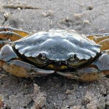 crab rave but it s not made by crabs by water malone free listening on soundcloud