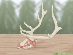 image titled mount antlers step 2