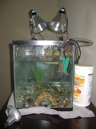 notice the turtle that looks smashed behind the intake filter actually he isn t stuck just enjoying some nice clean water