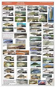 Nc Saltwater Fish Identification Chart Poster Page
