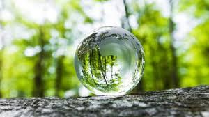 Image result for môi trường