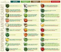Companion Planting Chart For Vegetables Chart Companion